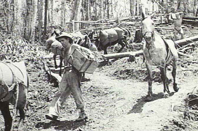 Is this what happened in world war II on the Kokoda trail?
